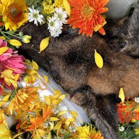 bang gia hoa thieu xac thu cung cho meo binh hung hoa